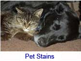 pet stains link